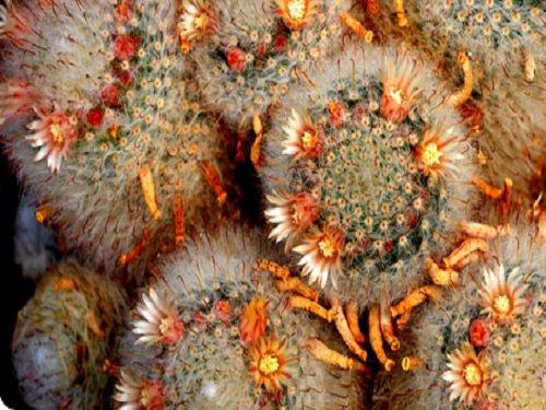 Paseo por Mexico Museo Vivo de Plantas en Asientos