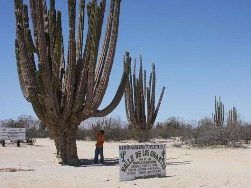 Paseo por Mexico Valle de los Gigantes en Mexicali