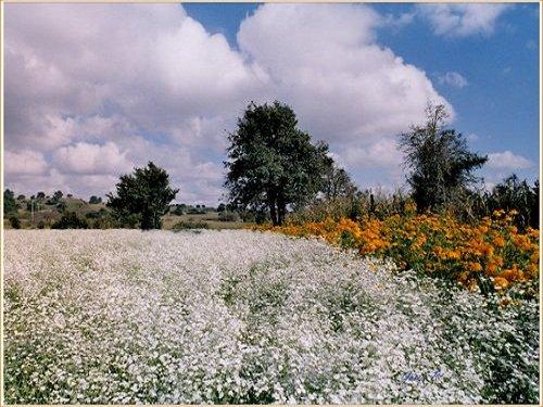 Paseo por Mexico Flores de Calpan