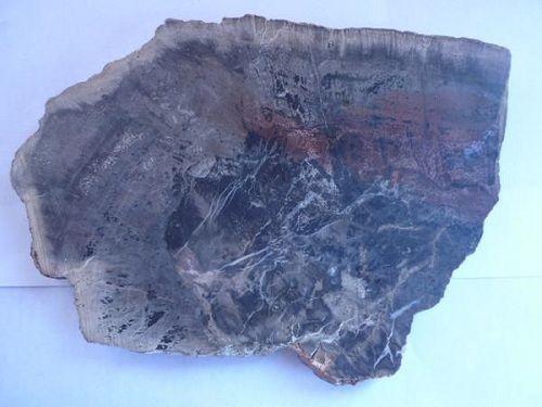 Paseo por Mexico Pieza de árbol fósil en Cuayuca de Andrade