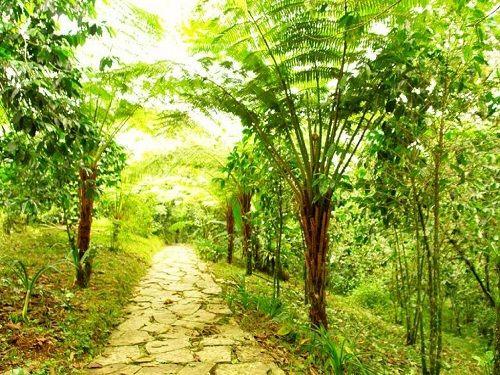 Paseo por Mexico Jardín botánico Xoxoctic de Cuetzalan del Progreso