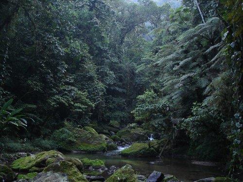 Paseo por Mexico Río el Tozan en Jonotla