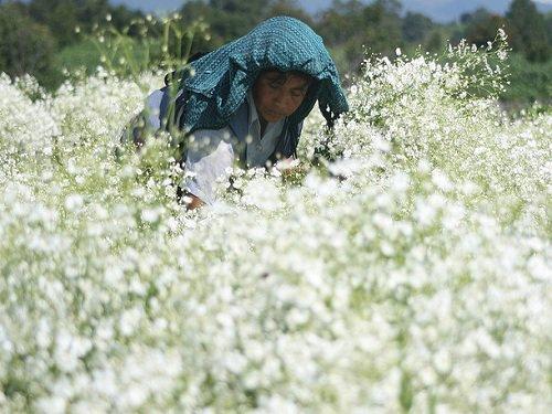 Paseo por Mexico Flores de Nealtican