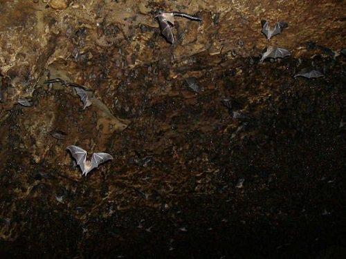 Paseo por Mexico Cueva de la Vega en Tenampulco