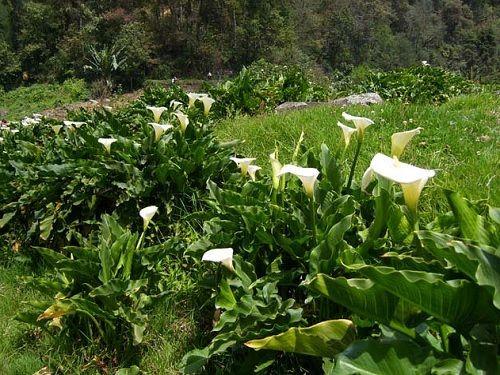Paseo por Mexico Cultivos de Alcatraces en Yaonáhuac