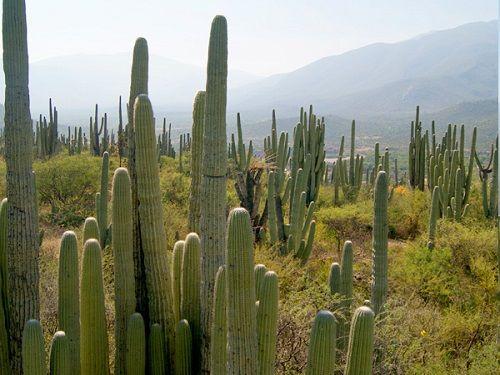 Paseo por Mexico Jardín Botánico Comunitario