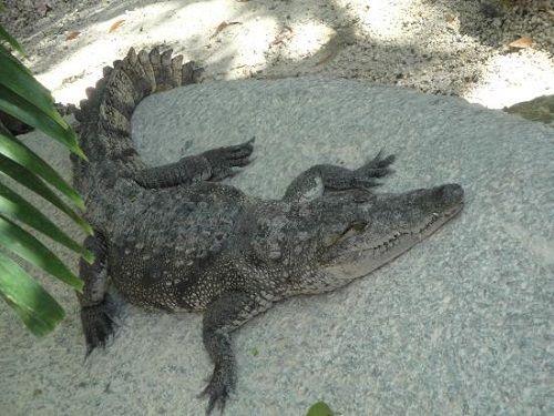 Paseo por Mexico Zoológico de Cocodrilos en Benito Juárez