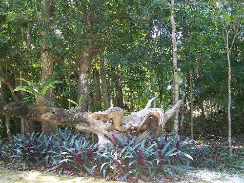 Paseo por Mexico Yaax Che Jardín Botánico Dr. Alfredo Barrera Marín