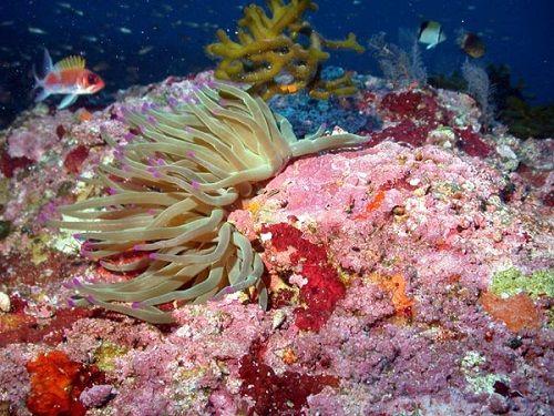 Paseo por Mexico Parque Nacional Arrecifes de Cozumel